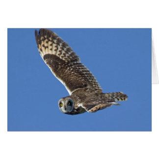 Short-eared Owl in Flight Card
