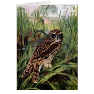 Short-eared Owl in Wetlands Greeting Card