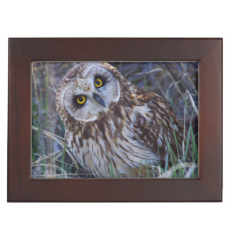 Short-eared Owl Keepsake Box