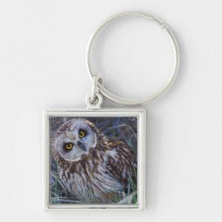 Short-eared Owl Key Ring