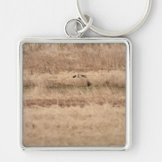 Short-eared Owl Keychains