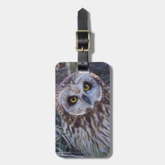 Short-eared Owl Luggage Tag
