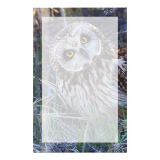 Short-eared Owl Stationery