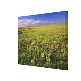 Short Grass Prairie in remote northeastern Canvas Prints