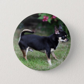 Short Haired Chihuahua Standing 6 Cm Round Badge