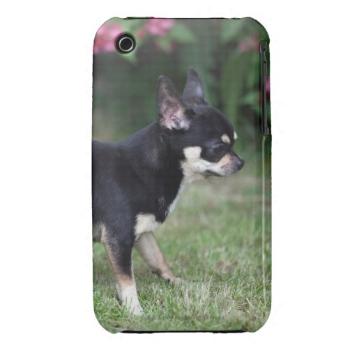 Short Haired Chihuahua Standing iPhone 3 Cover