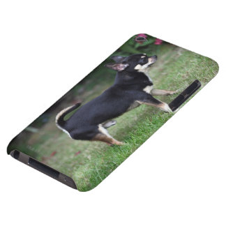 Short Haired Chihuahua Standing Barely There iPod Case