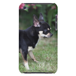 Short Haired Chihuahua Standing iPod Case-Mate Cases
