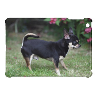 Short Haired Chihuahua Standing iPad Mini Cover