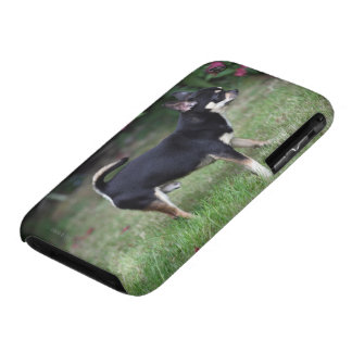 Short Haired Chihuahua Standing iPhone 3 Case