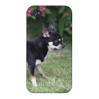 Short Haired Chihuahua Standing Case For iPhone 4