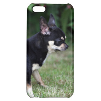 Short Haired Chihuahua Standing iPhone 5C Cases
