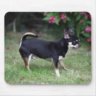 Short Haired Chihuahua Standing Mouse Mat