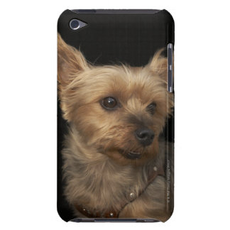 Short haired Yorkie dog looking to the right Barely There iPod Cases