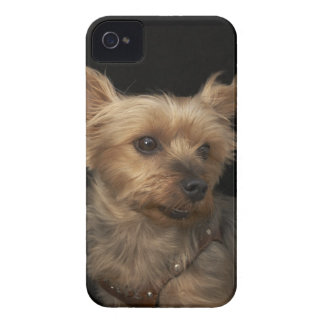 Short haired Yorkie dog looking to the right Case-Mate iPhone 4 Case
