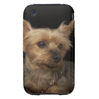 Short haired Yorkie dog looking to the right iPhone 3 Tough Covers
