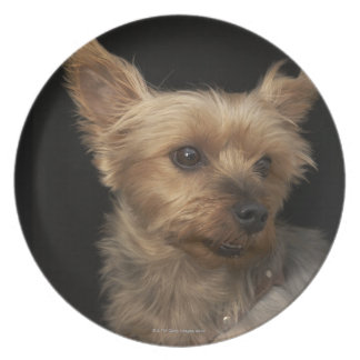 Short haired Yorkie dog looking to the right Party Plate