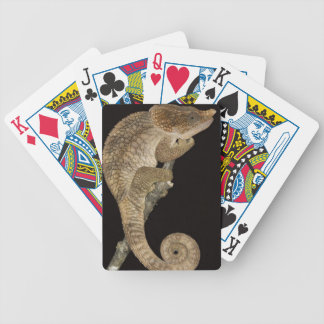 Short-horned chameleon(Calumma brevicornis) Bicycle Playing Cards