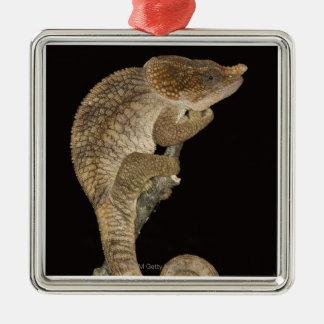 Short-horned chameleon(Calumma brevicornis) Christmas Ornament