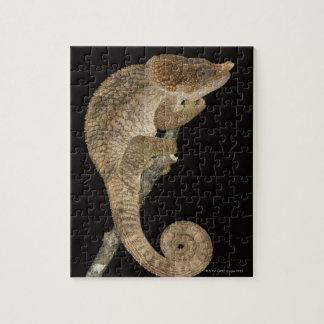 Short-horned chameleon(Calumma brevicornis) Jigsaw Puzzle