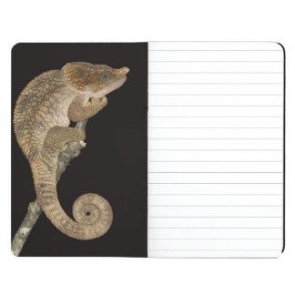 Short-horned chameleon(Calumma brevicornis) Journal