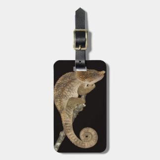 Short-horned chameleon(Calumma brevicornis) Luggage Tag