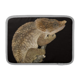 Short-horned chameleon(Calumma brevicornis) MacBook Sleeve