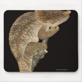 Short-horned chameleon(Calumma brevicornis) Mouse Mat