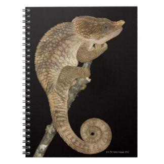 Short-horned chameleon(Calumma brevicornis) Notebooks