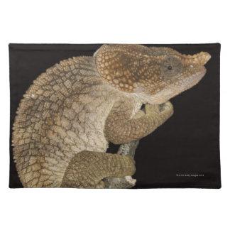 Short-horned chameleon(Calumma brevicornis) Placemat