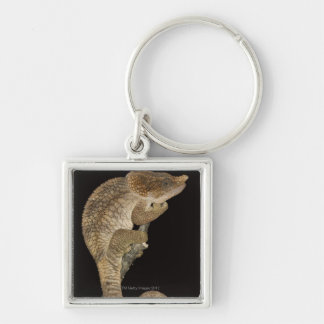 Short-horned chameleon(Calumma brevicornis) Silver-Colored Square Key Ring
