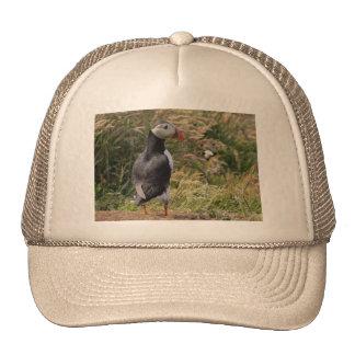 Short Puffin Hat