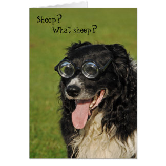 Short-sighted Border Collie Card