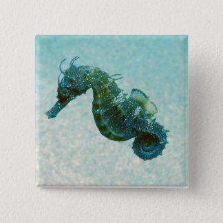 Short-Snouted Seahorse   Crimea, Russia 15 Cm Square Badge