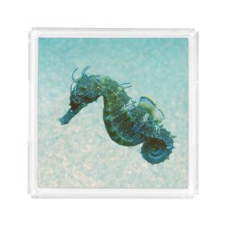 Short-Snouted Seahorse | Crimea, Russia Acrylic Tray