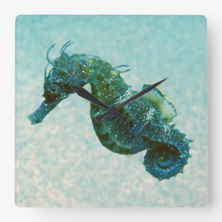 Short-Snouted Seahorse | Crimea, Russia Square Wall Clock