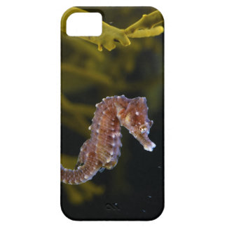 Short-snouted Seahorse Hippocampus hippocampus iPhone 5 Case