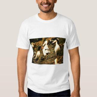 Short-tailed Albatross T-shirts