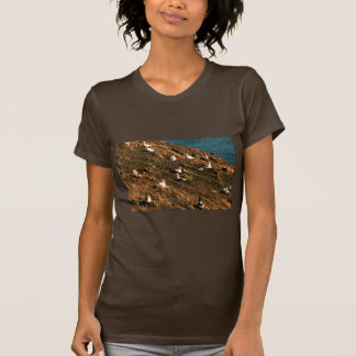 Short-tailed Albatross Shirts