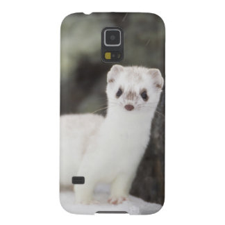 Short-tailed weasel hunting for voles case for galaxy s5