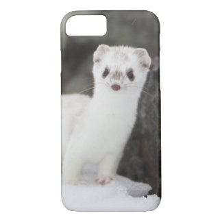 Short-tailed weasel hunting for voles iPhone 8/7 case