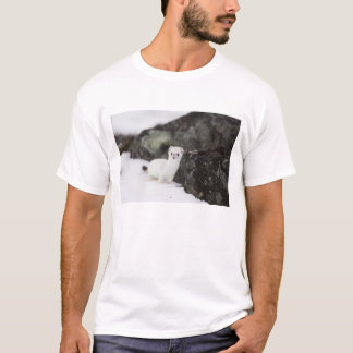 Short-tailed weasel hunting for voles T-Shirt