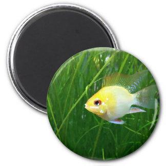 shortbodygoldenram_art1 6 cm round magnet