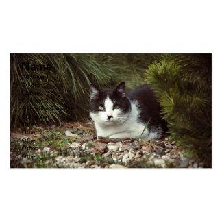 Shorthair Cat - Businesscard Business Card