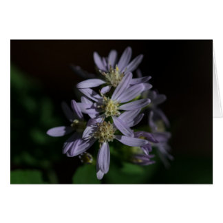 Short's Aster Purple Autumn Wildflower Card