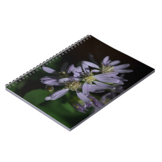 Short's Aster Purple Autumn Wildflower Notebook