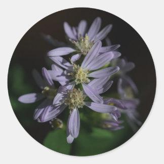 Short's Aster Purple Autumn Wildflower Stickers