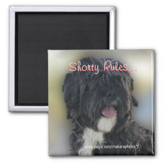 Shorty Lhasa Apso-Shih Tzu Magnet-personalize Magnet