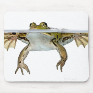 Shot of a Edible frog surfacing in front of a Mouse Pad