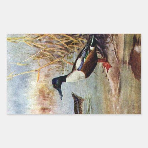 Shoveler Ducks Vintage Illustration Rectangle Stickers
